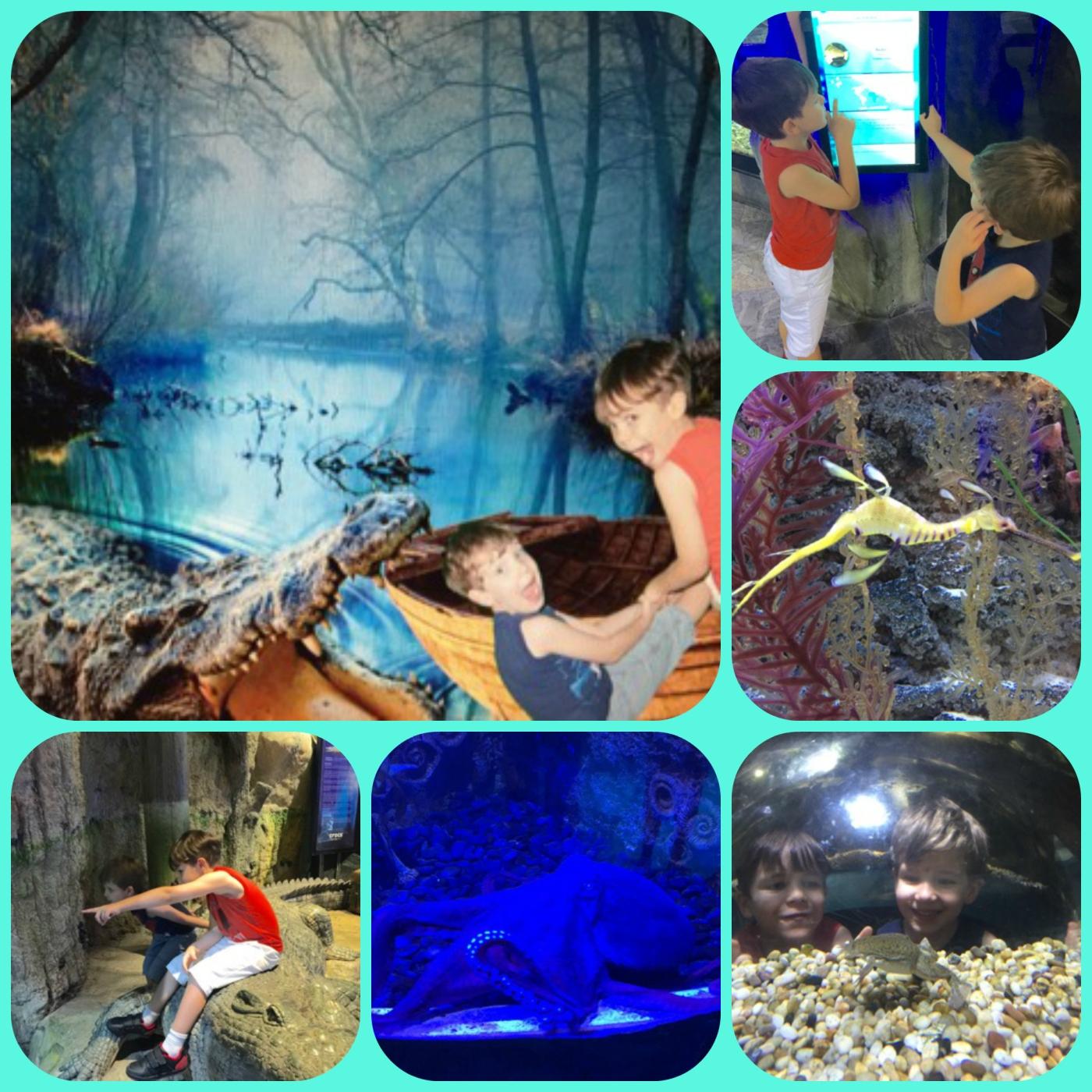 Underwater Zoo.jpg