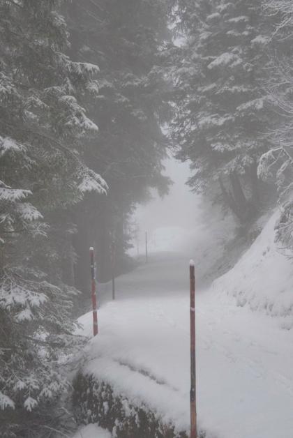 Snowy paths in Switzerland