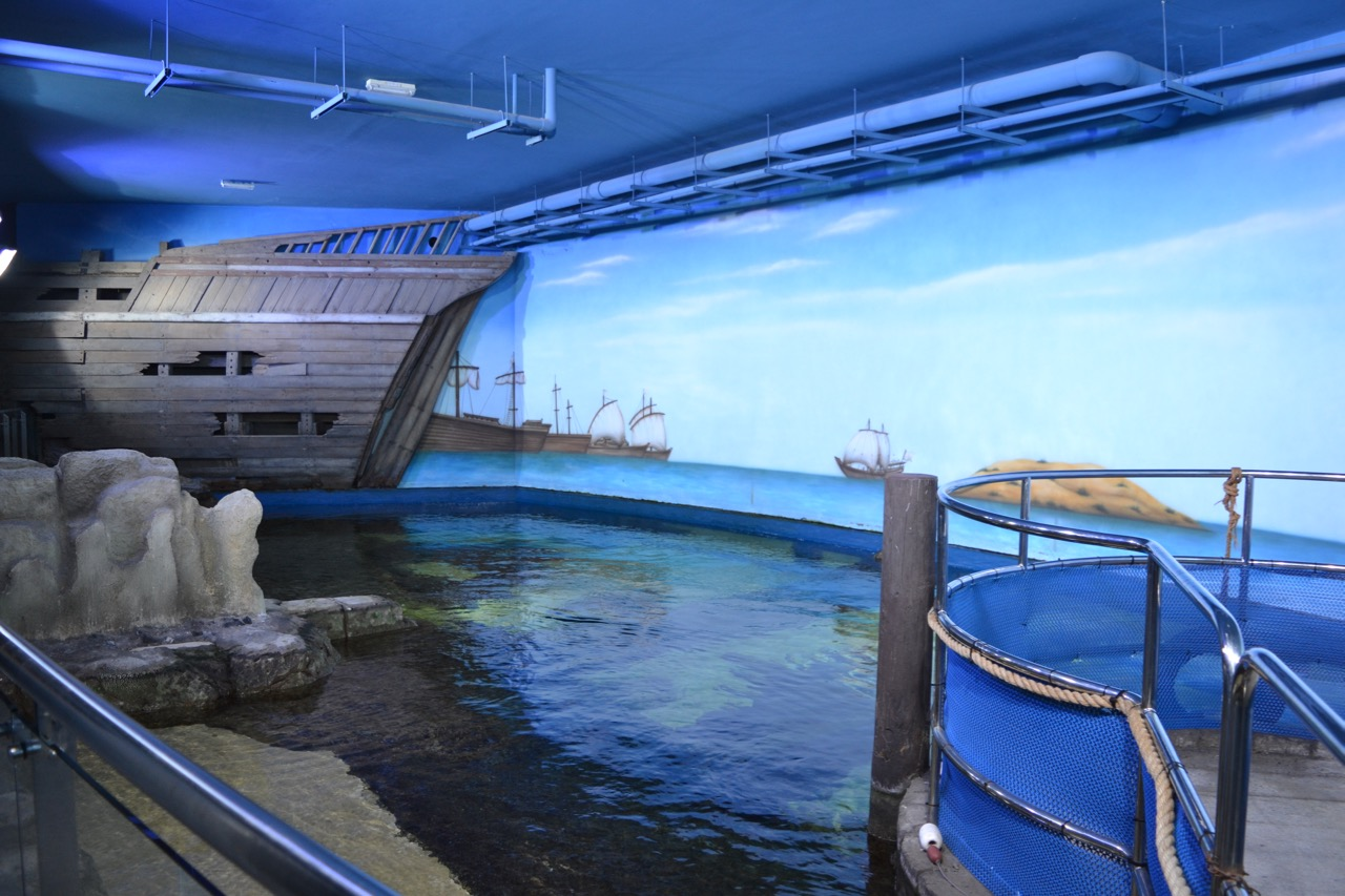 Sharjah aquarium shark tank